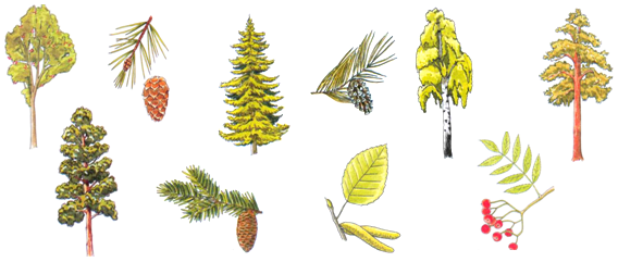 какие деревья каким знаком