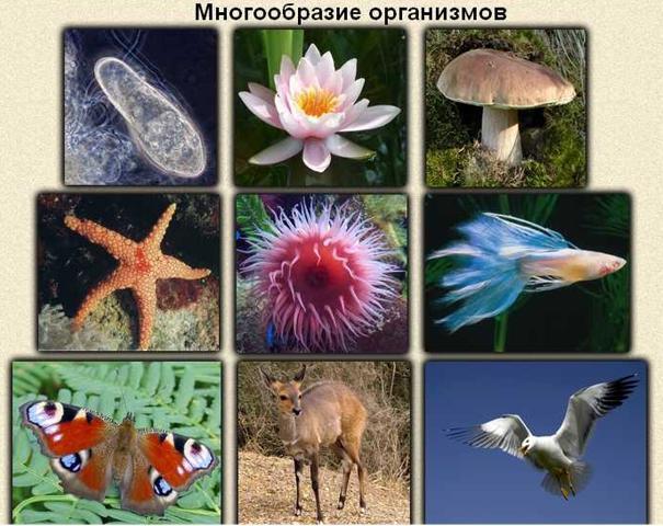 знакомство с многообразием водных простейших биология 7 класс